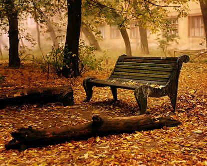 Обои Скамейка в осеннем сквере рядом с поваленными стволами деревьев
