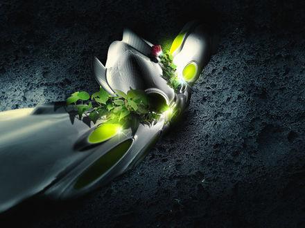 Обои Цветок на камне