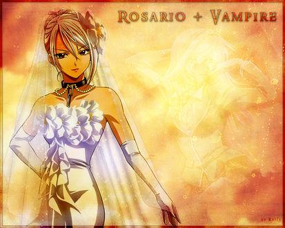 Обои Мока (rosario + vampire. by kasiа)