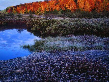 Обои Осень. Лес жёлтый,трава мерзнет