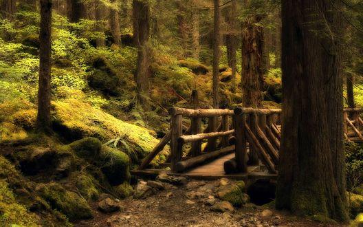 Обои Деревянный мост в дремучем лесу