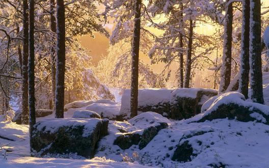 Обои Солнце в снежном лесу