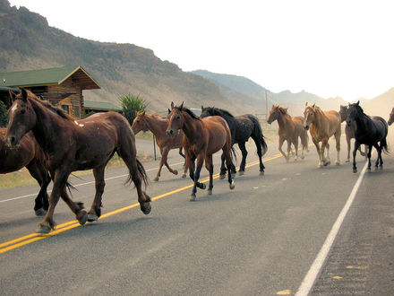 Обои Лошади бегут по дороге