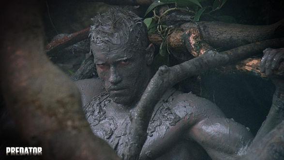 Обои Датч (Арнольд Шварцнегер)  из фильма «Хищник» (Predator)