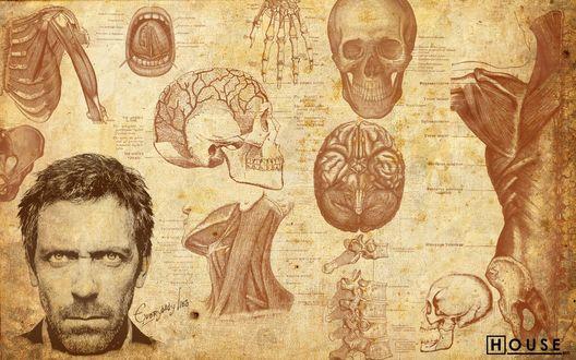 Обои Доктор Хаус на фоне анатомического атлоса в сериале «House m.d.» (everybody lies)