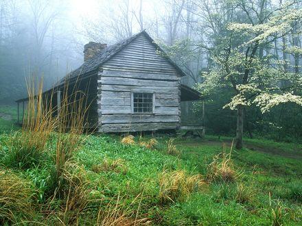 Обои Заброшенный дом по среди леса