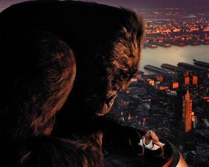 Обои Кинг-Конг смотрит на Наоми Уоттс на крыше небоскреба из фильма «Кинг-Конг»