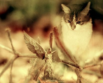 Обои Кот смотрит на ангела как на воробья (подглядывающий)