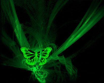Обои Зеленая бабочка