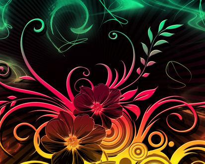 Обои Красивые цветные цветы