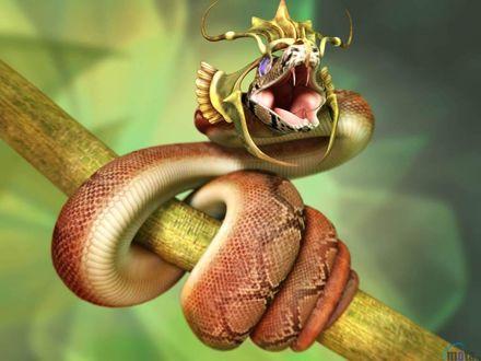 Обои Фантастически красивая змея обвила ветку