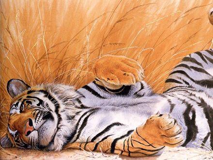 Обои Я на солнышке лежу, я на солнышко гляжу! Тигр лежит на спине и задрал лапы.