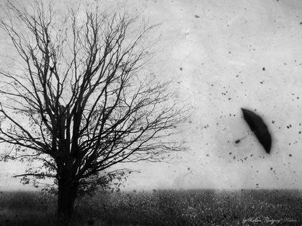 Обои холод, зима, арт, фото, зонт, поле, свобода, одиночество, грусть by Ruslan Jodgory Kadiev