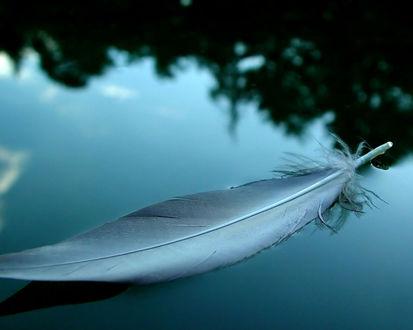 Обои Птичье перо плывет по воде