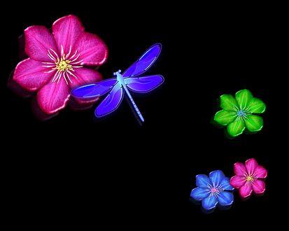 Обои Стрекоза летает с цветочка на цветочек