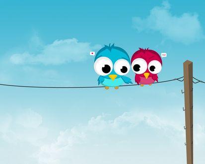 Обои Две пташки сидят на проводах и в ответ на объяснение в любви птыц получает отказ в нецензурной форме - ?!#@!
