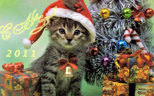 Обои Котенок в новогодней шапке перед елкой (С Новым Годом 2011)