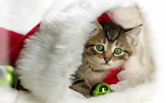 Обои Котёнок в шапке Деда Мороза с ёлочной игрушкой