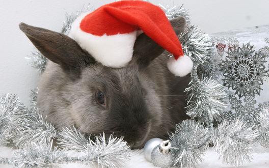 Обои Кролик-символ 2011 года с шапке Деда Мороза рядом с елочными игрушкамиза