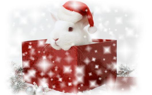 Обои Новогодний подарок-кролик