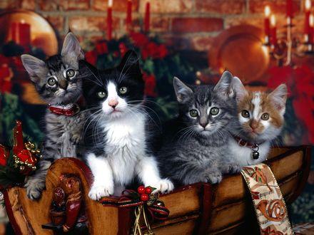 Обои Котята среди рождественской атрибутики