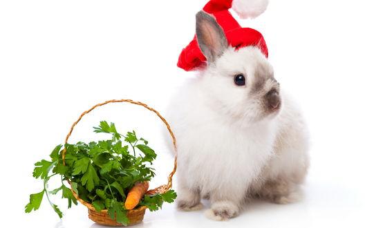 Обои Новогодний кролик с корзинкой еды