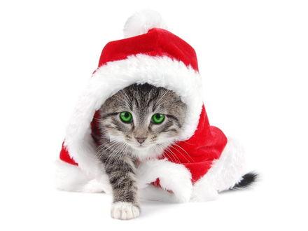 Обои Новогодний кот (Кот в шапке и пальто Деда Мороза)