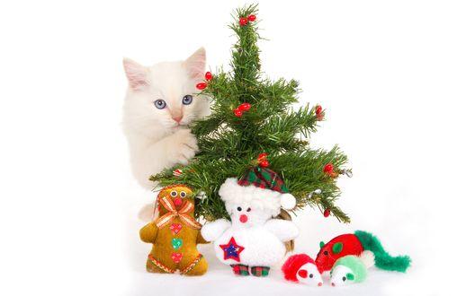 Обои Кошка выглядывает из-за елки, под которой лежат игрушки: плюшевые мышки, медвешонок и пряничный человечик