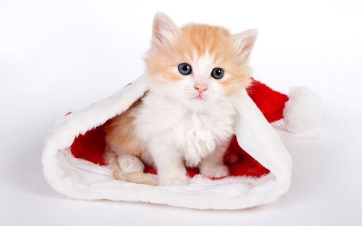 Обои Котенок в новогодней шапке