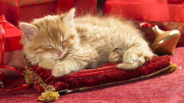 Обои Кошка спит на красной бархатной подушке и новогодние игрушки
