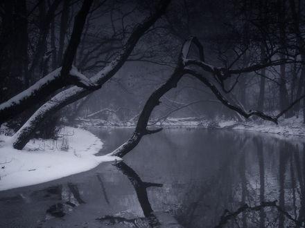 Обои Над тёмной рекой угрожающе склонилось дерево, слишком ему тяжело под снегом