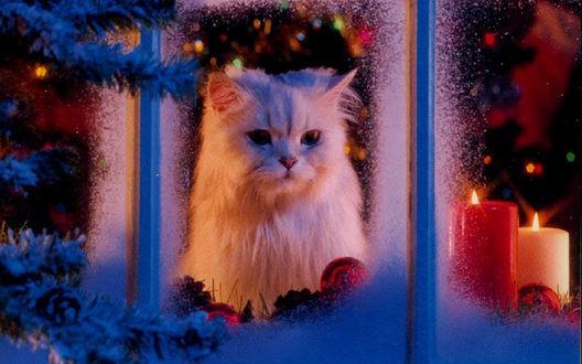 Обои Кот смотрит через прихваченное морозом стекло на улицу, за ним в комнате виднеется красиво наряженная ёлка и горят свечки.