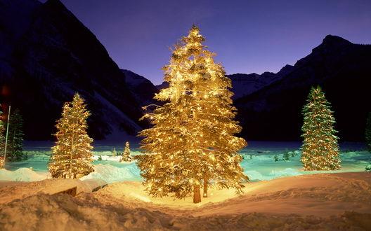 Обои Ёлочки ярко освещают ночной лес сиянием гирлянд, праздник приближается!
