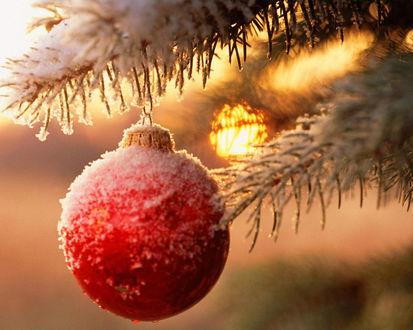 Обои Красный шарик на ветке под снегом