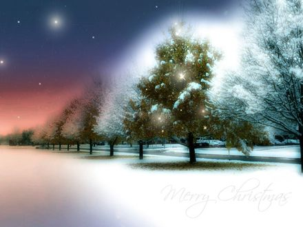 Обои Merry Christmas Сказочной красоты зимний лес.