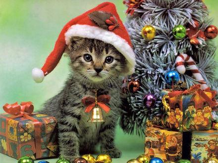 Обои Кот рядом с новогодней елочкой