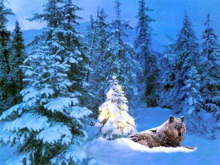 Обои Волк отмечает Новый Год