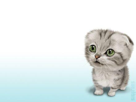 Обои Смешной серый котёнок с зелёными глазами (Барсик в детстве)