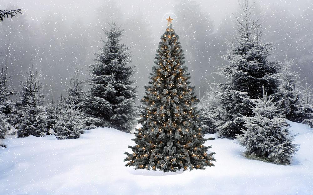 Обои для рабочего стола Красиво украшенная к Новому году ёлка стоит в лесу среди своих серых подруг