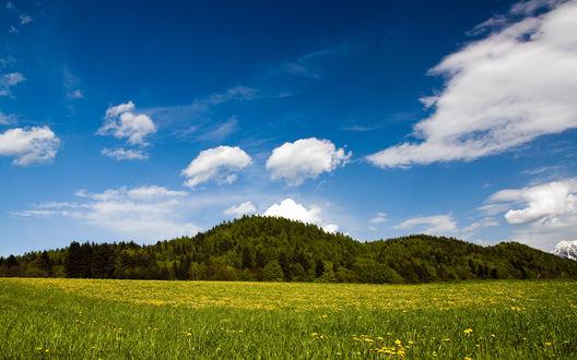 Обои Лес и поле с желтыми цветами