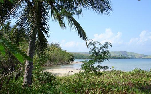 Обои Лагуна с пальмой и смешанным лесом