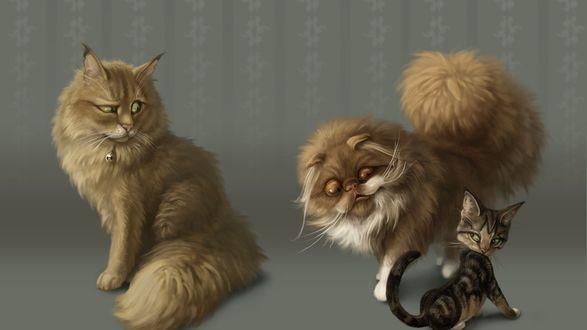 Обои Прикольные мордашки пушистых котов, наблюдающих за полосатым