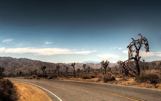 Обои Дерево Джошуа Национальный парк, юго-восточная Калифорния автор myINQI