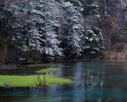 Обои Заснеженные деревья над водой