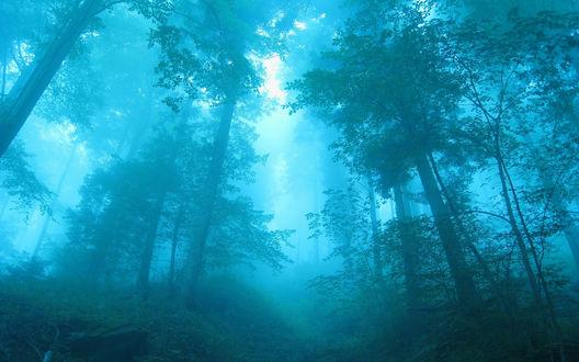 Обои Лес в утренней дымке