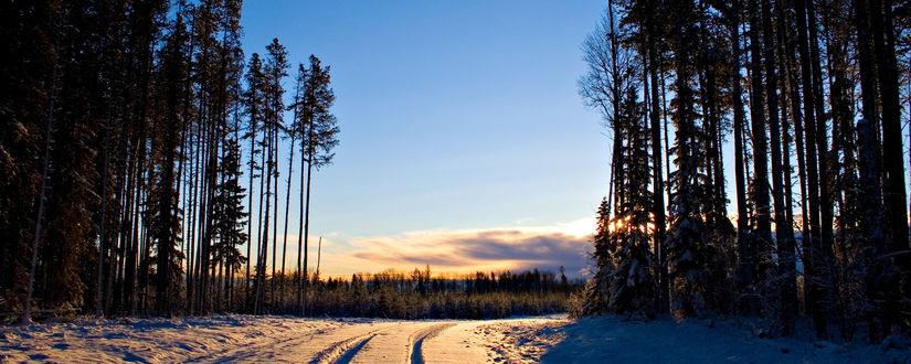 Обои Зимой в лесу