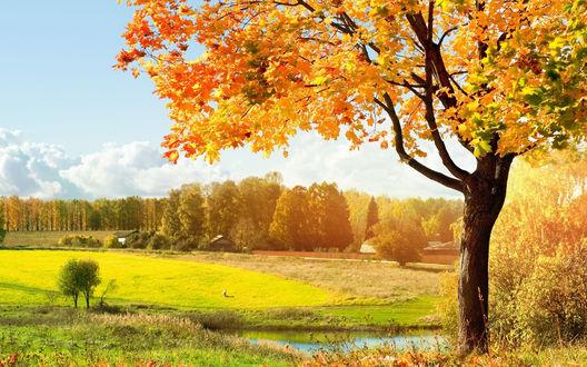Обои Вроде летний пейзаж.. но об наступившей осени говорит пожелтевшее дерево