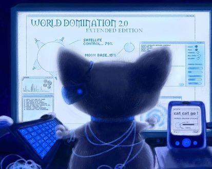 Обои Трудно описать, что видит этот кот на мониторе компьютера, мы же не такие умные, как это уникальное животное