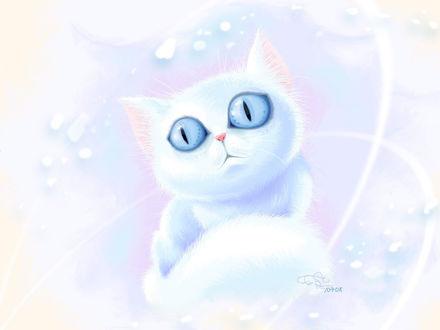 Обои Белый голубоглазый котёнок