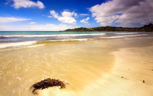 Обои Отлив. Море уходит, оставляя на песке отмершие водоросли, вдали виднеется скалистый берег